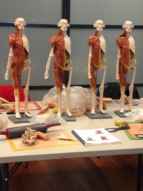 Anatomy In 3 D Rocked My World Soma Pilates