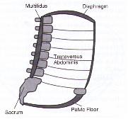 Inner Core Unit