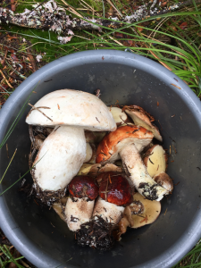 Check out these beautiful mushrooms that our instructor Kate foraged this season. Her mushroom soup is amazing