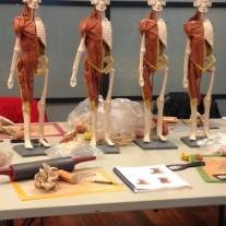 Anatomy in 3-D Rocked My World
